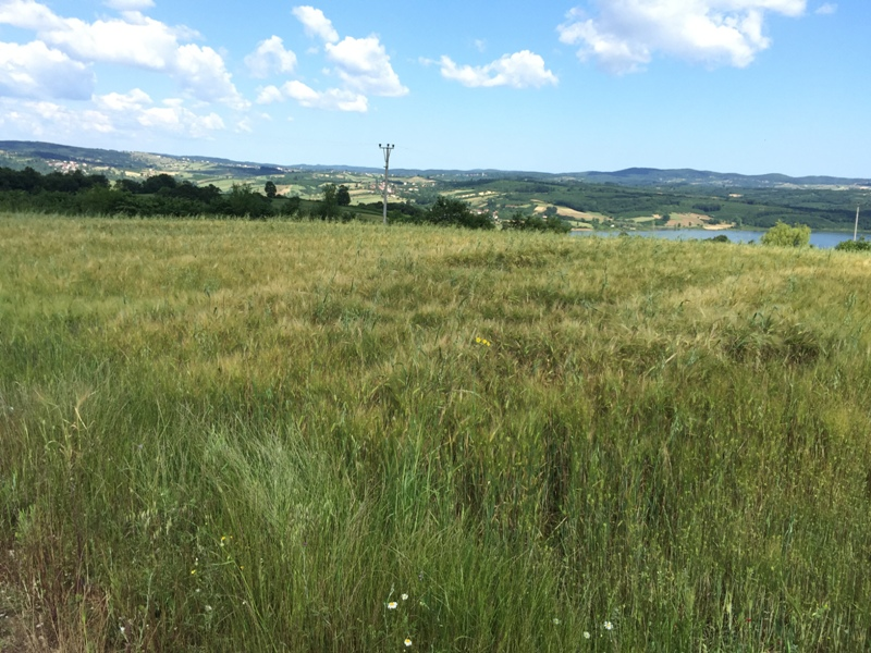 Kaçmaz Gayrimenkulden Kandıra Yusufcada İmarlı Satılık Arazi