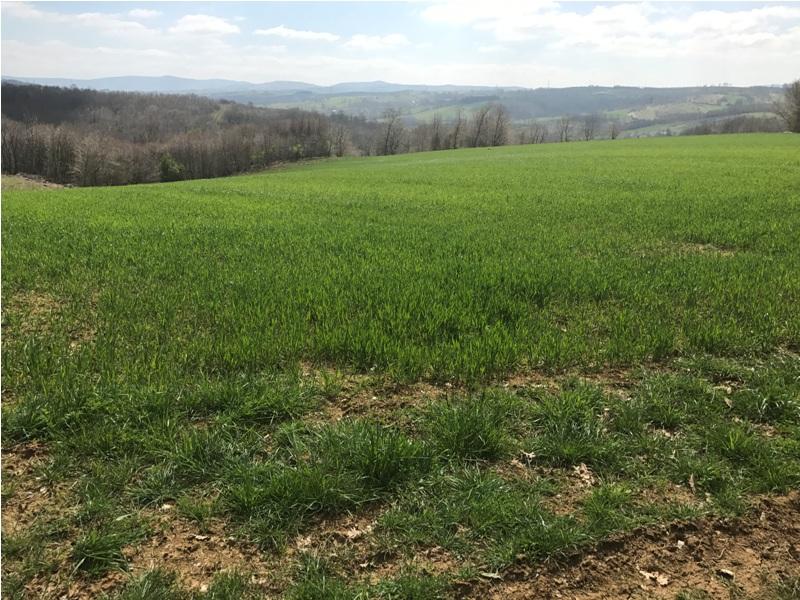 Kandıra dalca da ahır çiftlik için de uygun arazi